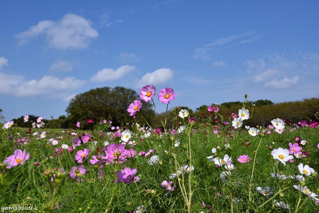 うみなか花の丘 DSC_3710
