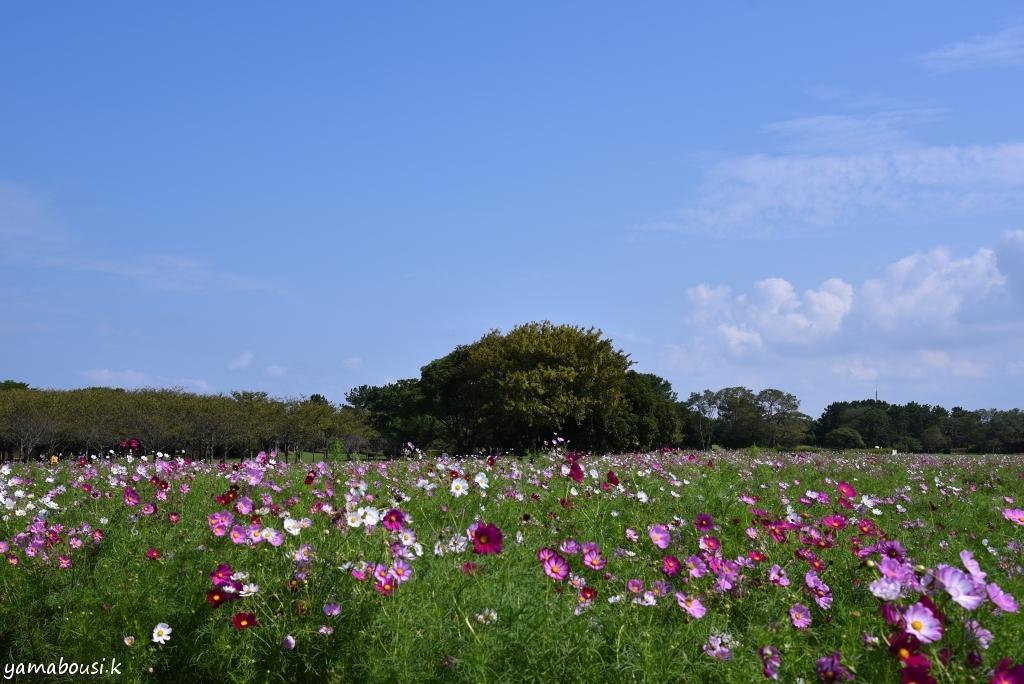 うみなか花の丘 DSC_3731