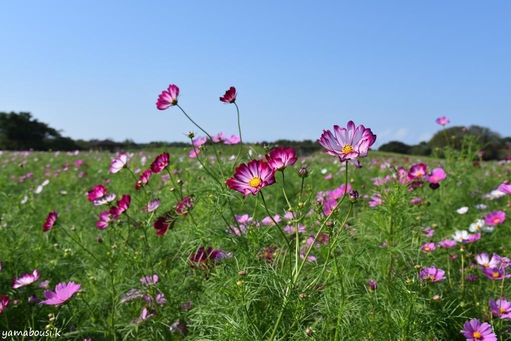 うみなか花の丘 DSC_4056