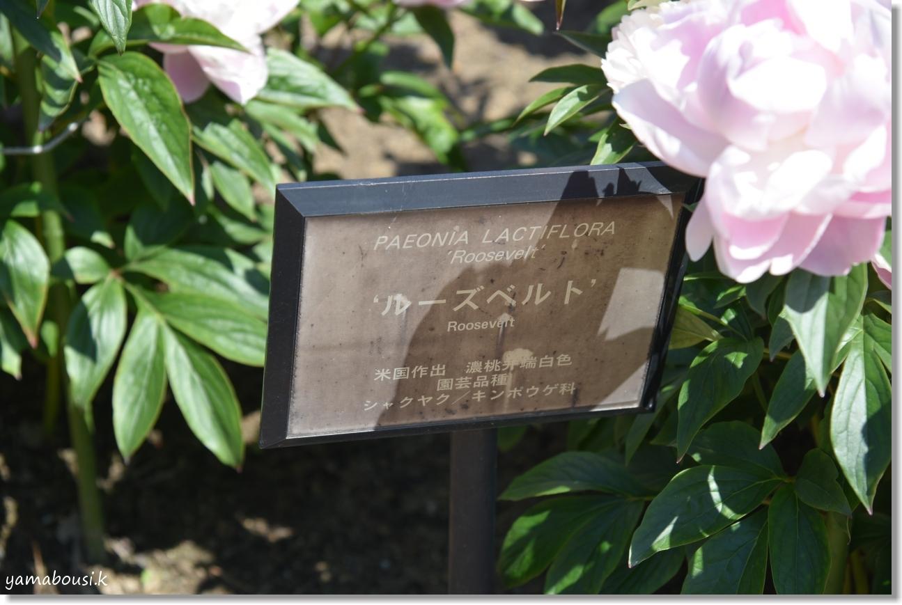 うみなか花の丘 DSC_4074