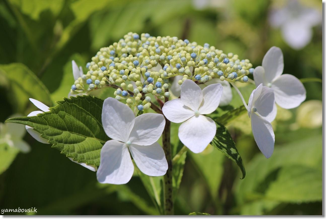 雨の季節を彩る花々 2