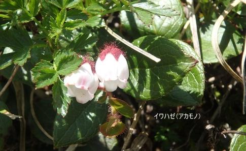プライベート(唐松岳) 120-001