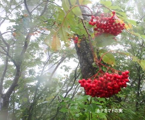 大山(chocoちゃんファミリーと) 026-001