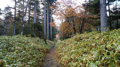 雌阿寒岳湖畔コース登山道1