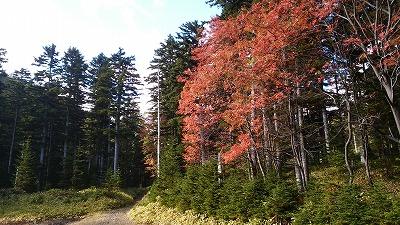 雌阿寒岳湖畔コース登山道2
