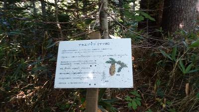 斜里岳玉石樹木解説1