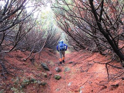 雌阿寒岳湖畔コース登山道5