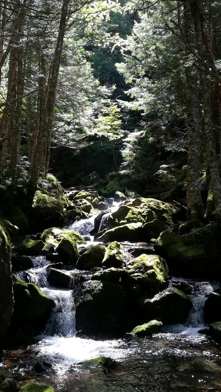 夏沢鉱泉とオーレン小屋の間