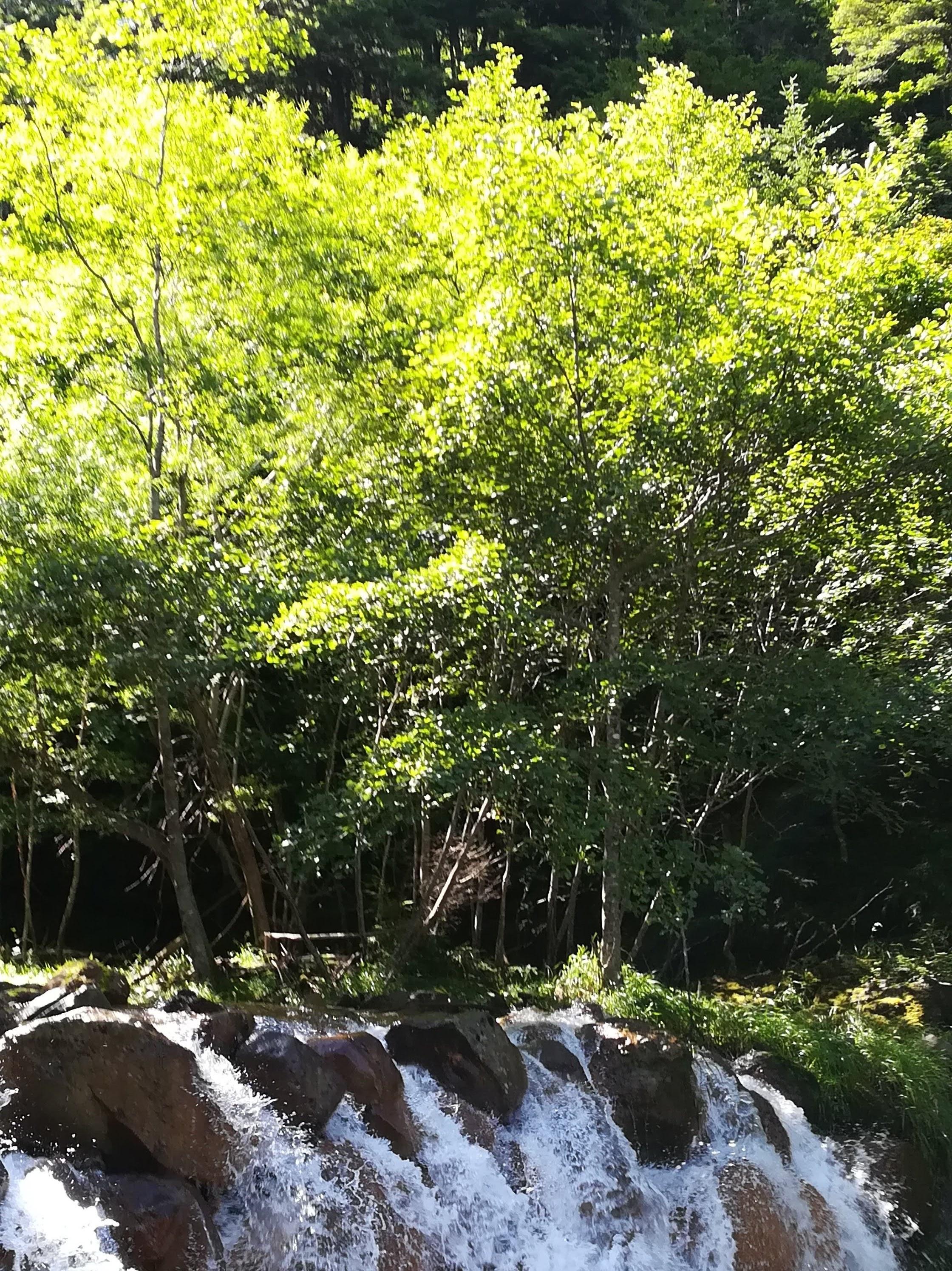 夏沢鉱泉近くの沢
