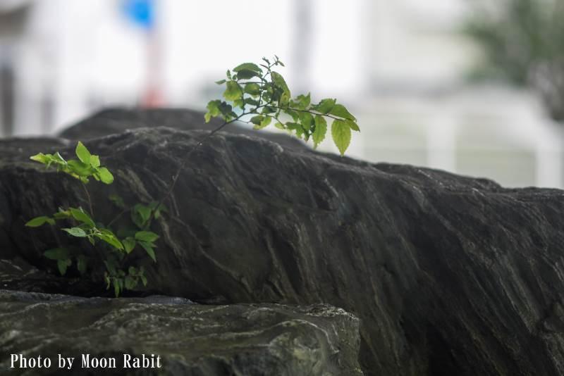 雑草 三本松公園 愛媛県西条市三本松