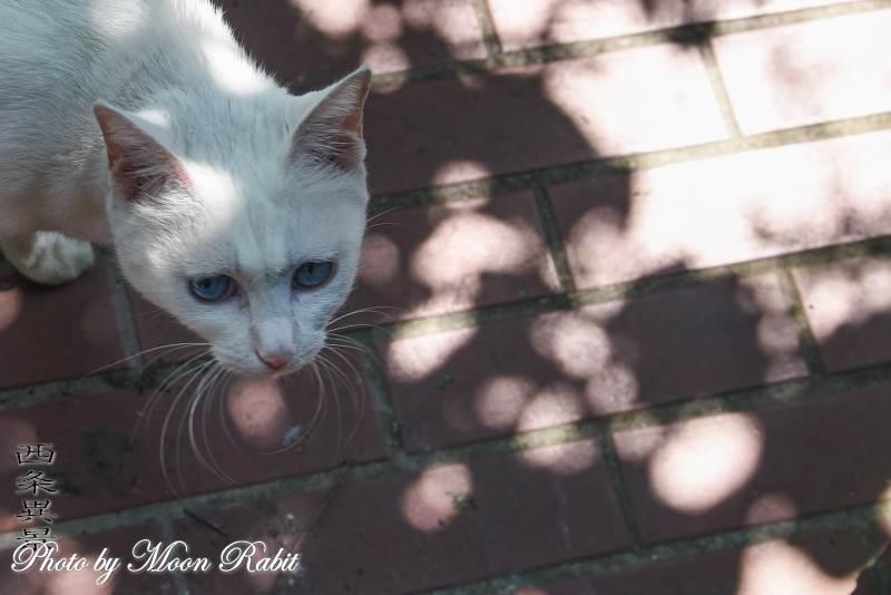 白猫 愛媛県西条市西新町