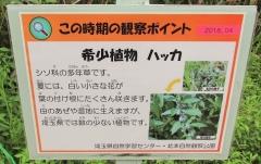 kitamoto180812-204.jpg