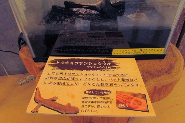 noyamakita-rokudouyama180805-110.jpg