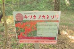 noyamakita-rokudouyama180805-201.jpg