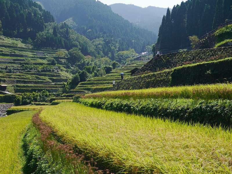 日本の原風景!で過ごす休日「うきはの葛篭棚田(福岡県うきは市)」