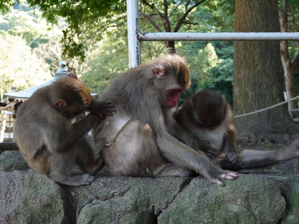 寄せ場でまったり☆野生の猿とのふれあい「高崎山自然動物園(大分県大分市)」