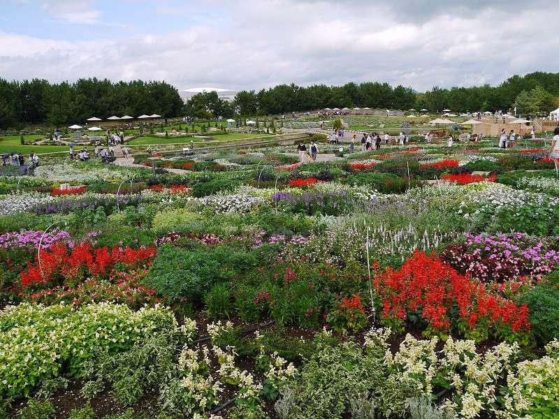 1000万本の花の谷で好きな花がきっと見つかる☆開幕!「山口ゆめ花博(山口県山口市)」