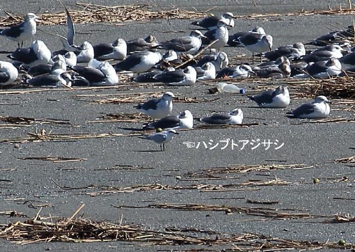 1M6A9632対岸の砂浜