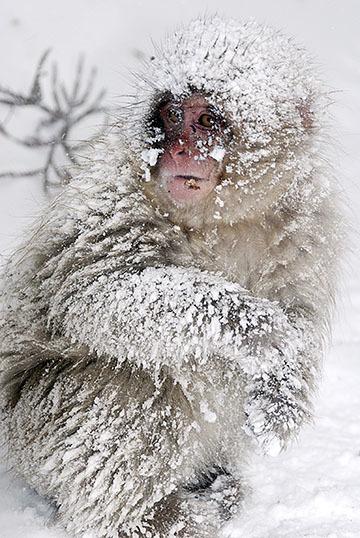 blog (4x6@240) Monkey Baby in blizzard P-2.23.08