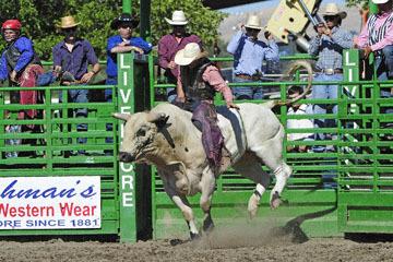 blog (6x4@300) Yoko 76 Livermore, Bull Riding 5, Chadd Ellison (NS Porterville, NV)_DSC8023-6.10.17.(3).jpg