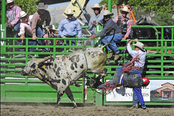 blog (6x4@300) Yoko 76 Livermore, Bull Riding 4, Money Crist (NS Reno, NV)_DSC8018-6.10.17.(3).jpg