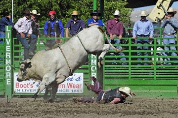 blog (6x4@300) Yoko 76 Livermore, Bull Riding 5, Chadd Ellison (NS Porterville, NV)_DSC8030-6.10.17.(3).jpg