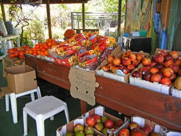 blog CP2 Lunch, Farm   Fruit Shop, Bakersfield, CA_DSCN8500-4.8.18.jpg