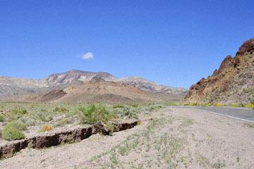 blog 14 Beaty, NV to Death Valley, CA~374W-190E, Corkscrew Peak to Badwater Basin, Wallace's Woolly Daisy ? (Antheropeas wallacei), CA_DSC7909-3.23.17.jpg