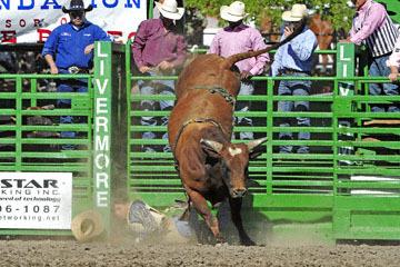 blog (6x4@300) Yoko 76 Livermore, Bull Riding 7, Jesse Flores (NS)_DSC8057-6.10.17.(3).jpg