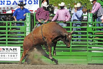blog (6x4@300) Yoko 76 Livermore, Bull Riding 7, Jesse Flores (NS)_DSC8055-6.10.17.(3).jpg