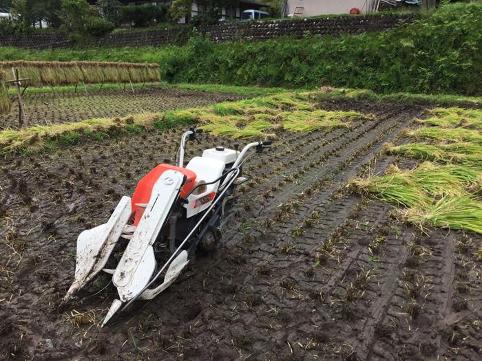 農繁期 2018 秋 たかやまもち稲刈り 2