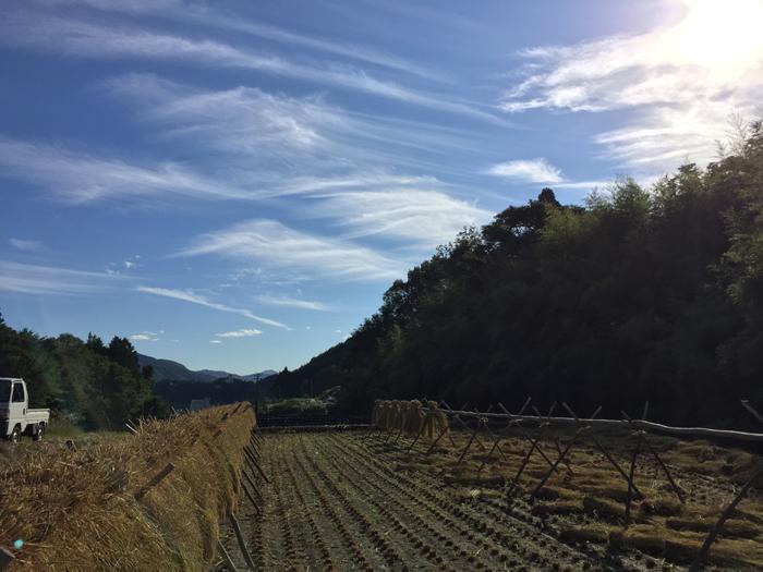農繁期 2018 秋 コシヒカリ稲刈り 2