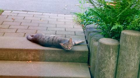ぐったり猫2