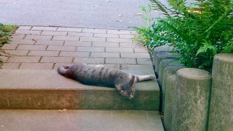 ぐったり猫3