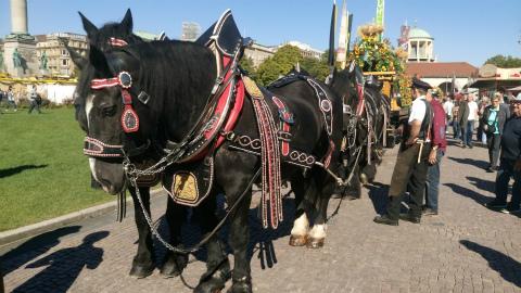 Stuttgarter-Hofbräuの馬