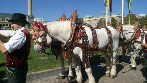 Dinkelackerの馬1