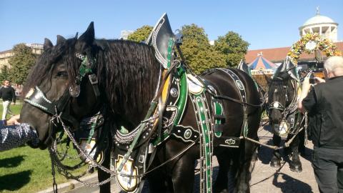 Schwabenbräuの馬