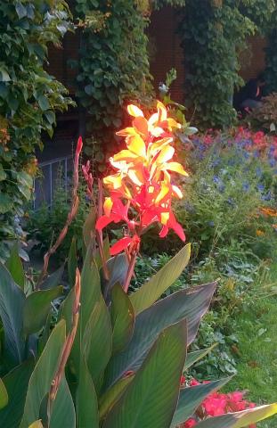 Whの花1