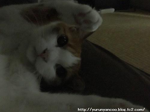 ブログNo.1281(心配してくれる猫)2