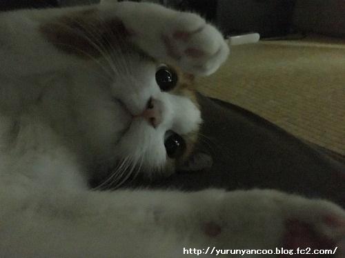 ブログNo.1281(心配してくれる猫)3