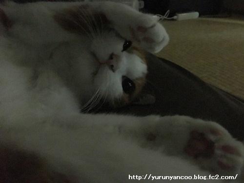 ブログNo.1281(心配してくれる猫)4