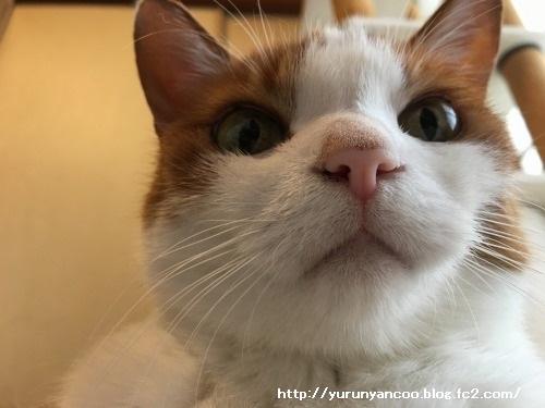 ブログNo.1281(心配してくれる猫)5