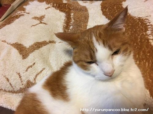 ブログNo.1288(枕カバーと同化する猫)1