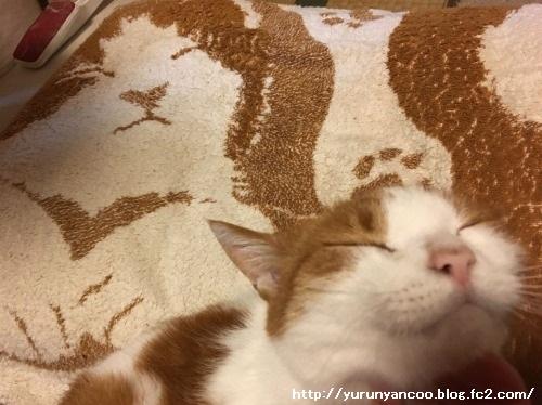 ブログNo.1288(枕カバーと同化する猫)4