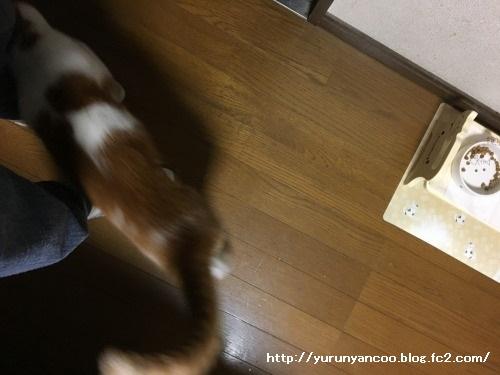 ブログNo.1301(進歩した添い寝)4