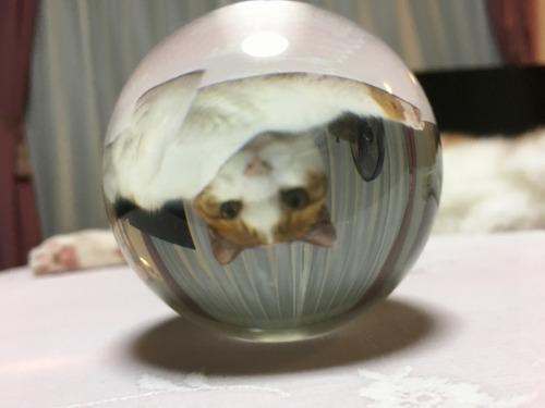 ブログNo.1305(猫の標本)9