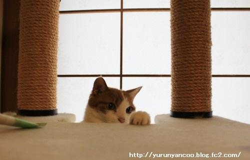ブログNo.1282(おっさんだって遊びたい!)4