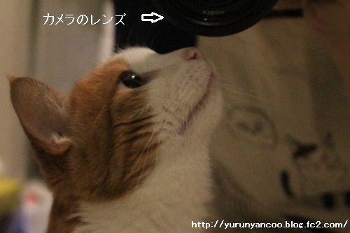 ブログNo.1307(どうしてなのか不思議)10