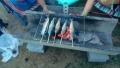 今回の焼き魚