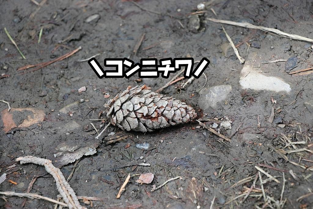 yurukyan0343.jpg